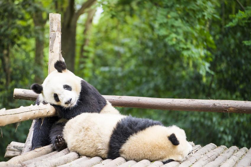 Das Panda Syndrom Bei Paaren Eric Hegmann